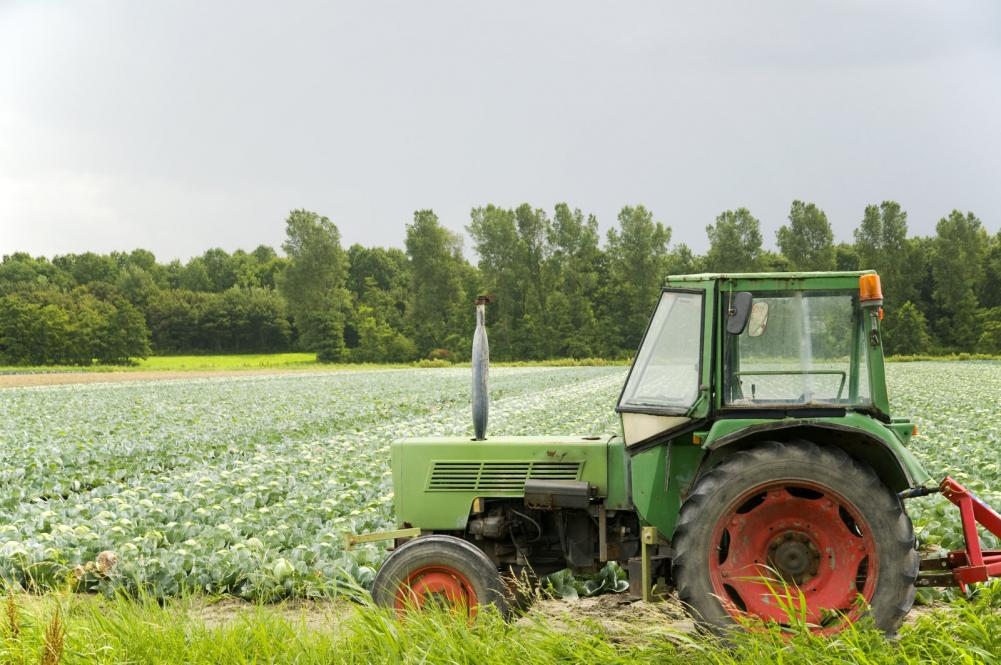 Agriculture landscape with cabbages and tractor in front